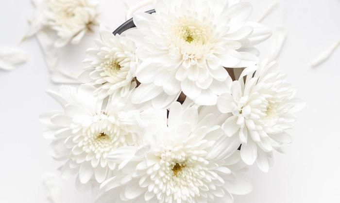 【ホワイト手法】アフィリエイトの初期費用